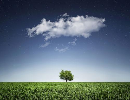 #JournéeDeLaTerre – Earth Day : ceux que l'on oublie (EN, FR, ES)